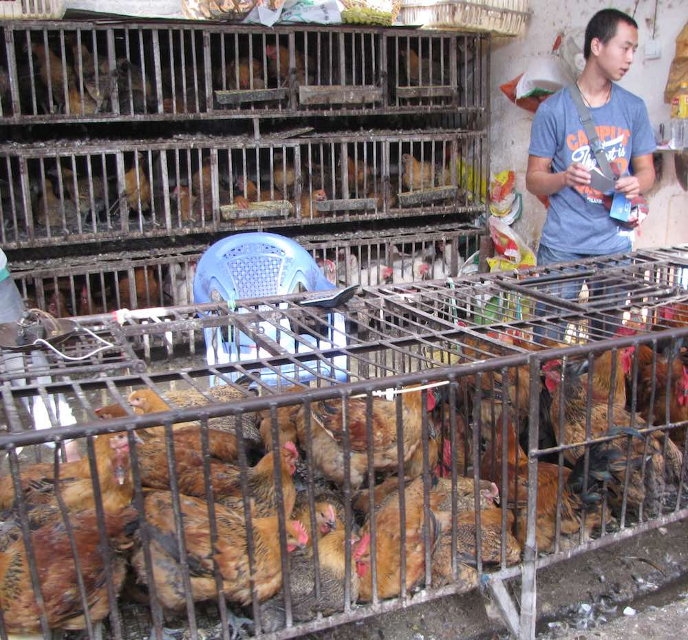 caged chickens for sale at the market