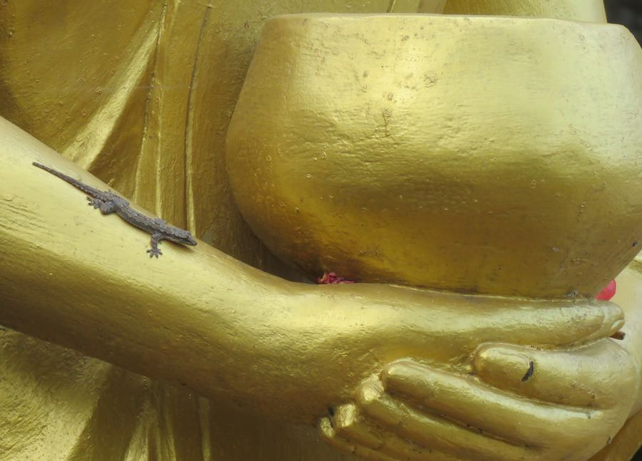 photo of Lizard on golden Buddha statue