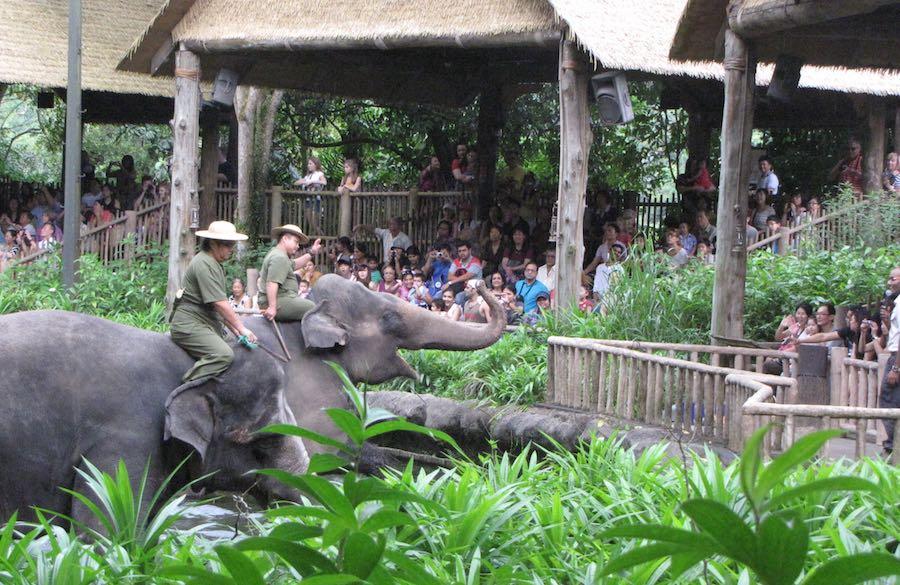 Singapore Zoo, Elephant show