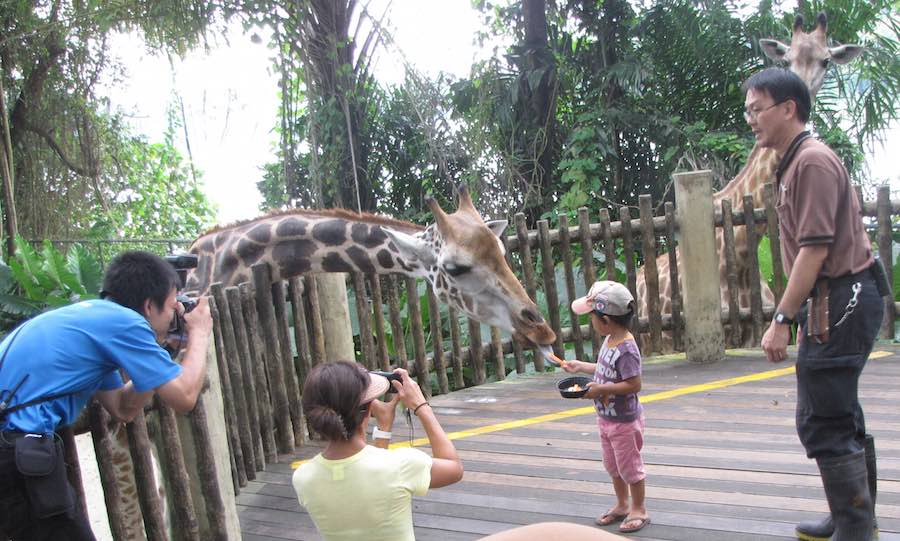 Singapore Zoo, kid feeding giraffe