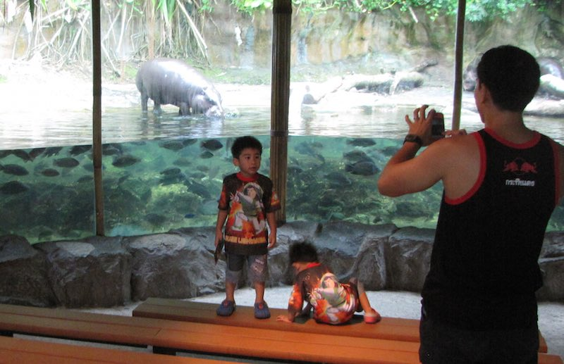 Singapore Zoo, kids in front of exhibit of hippo and fish