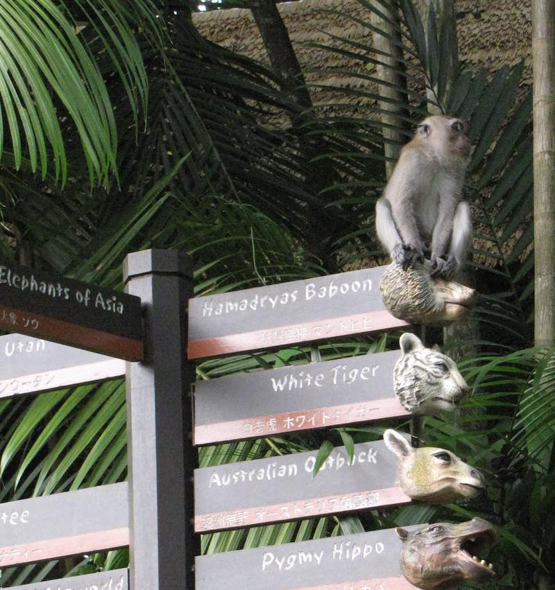 Singapore Zoo, monkey on a sign