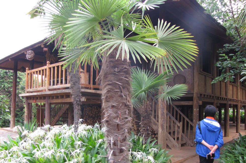Traditional Yunan House on Stilts with palm tree in front