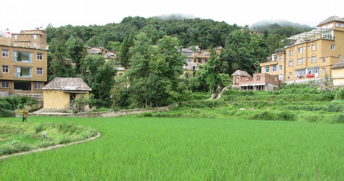 View of green rice fields with my guesthouse in the background