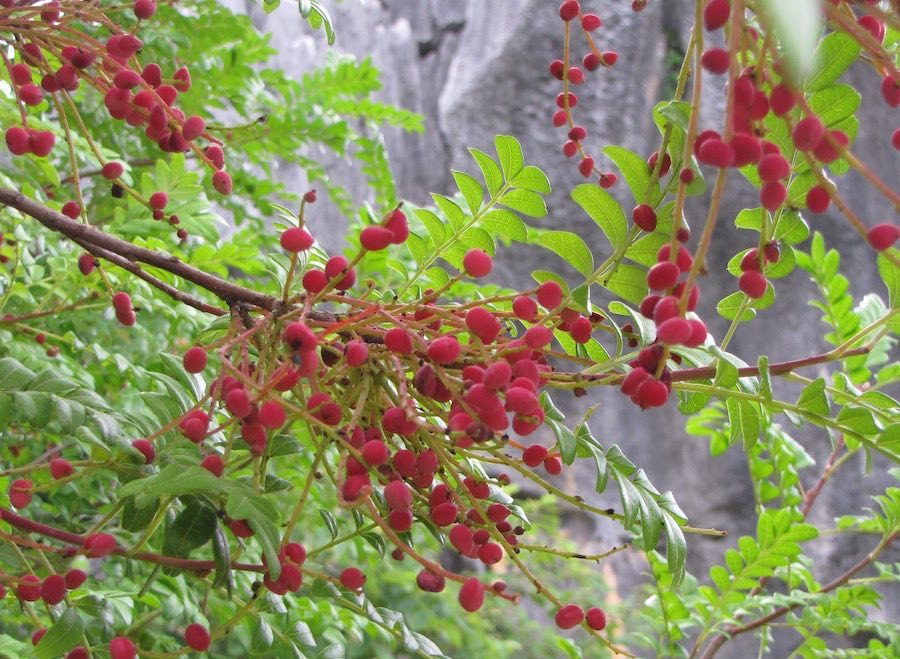 Red berries on a bush with stone pillars in the background