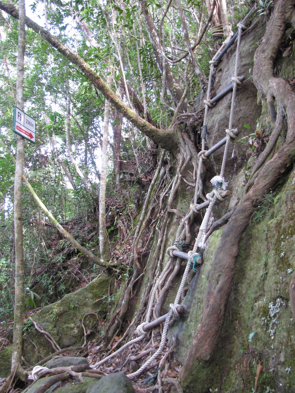 rope ladder on jungle trail