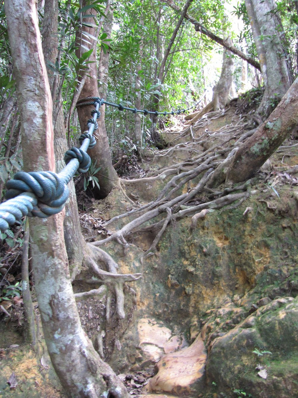 rope handhold for steep jungle trail, Mount Santubong, Sarawak, Malaysia