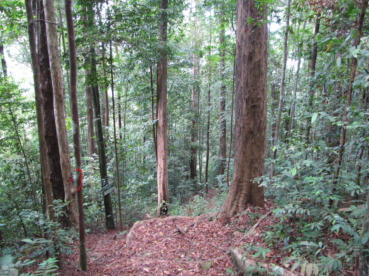 Steep jungle trail through trees
