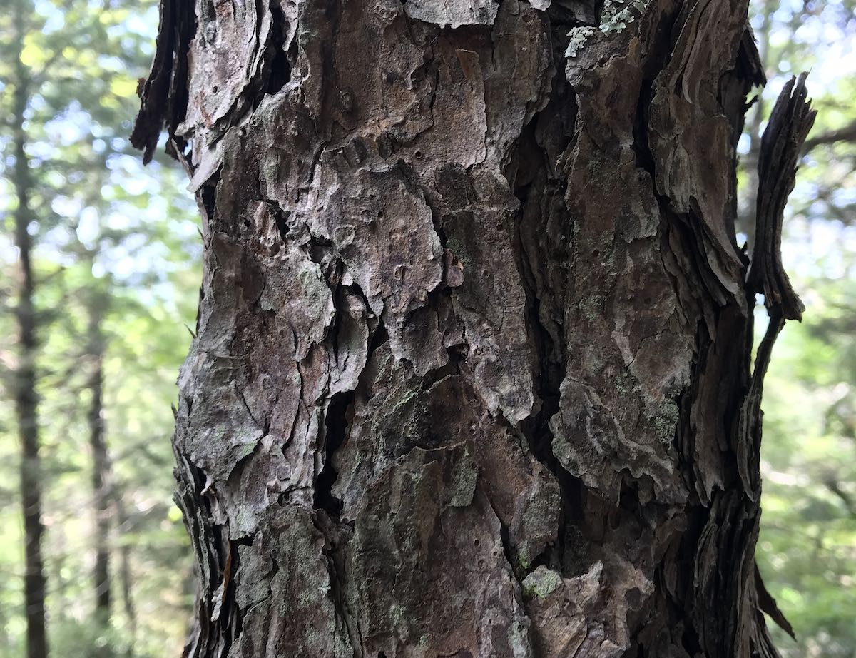 bark on tree trunk