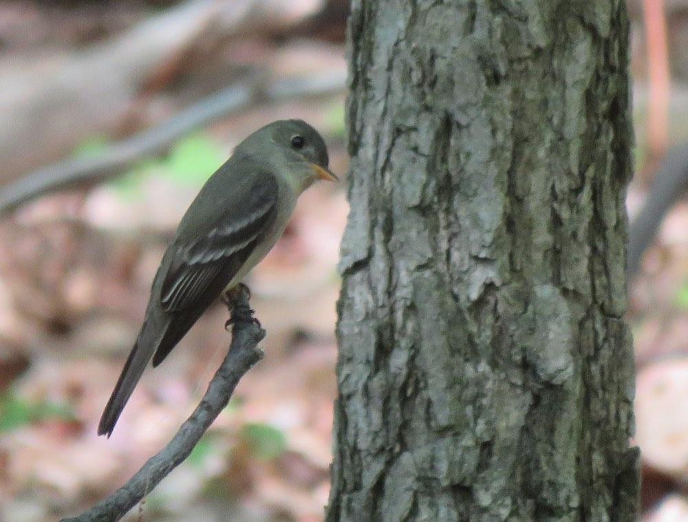 small bird looking at tree bark